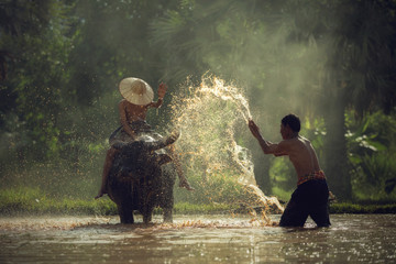 Asian farmers working with Buffalo and his son sitting on a buffalo.