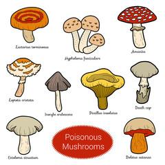 Color set of poisonous mushrooms