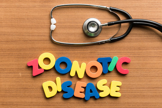 zoonotic disease colorful word with stethoscope