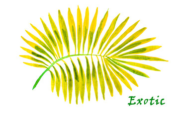 Palm leaves on the white background. Watercolor with tropical pl