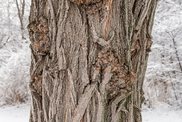 Tree trunk isolated in forest setting. Isolated tree trunk textures. Nature tree trunk isolated. Forest tree trunk isolated. Abstract nature art and background. Minimal natural art.