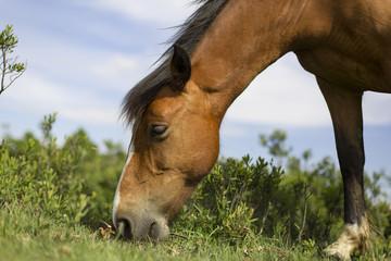 Koń na polanie - fototapety na wymiar
