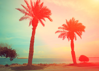 Tropical beach with palm trees at sunset background. Dead Sea beach in Ein Gedi, Israel