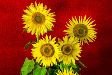 Vier Sonnenblumen vor rotem Hintergrund