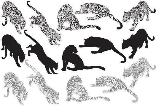 Set of leopard on a white background