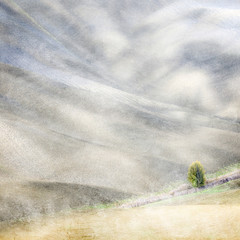 Abstract image of solitary tree on rolling landscape