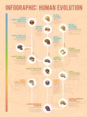 Human evolution infographic.