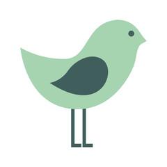 cute bird animal isolated