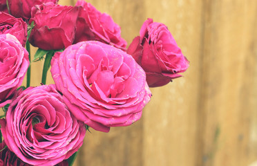 Bunch of hot pink lace roses against a wood wall background