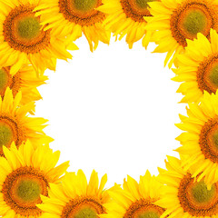 Sunflower background. Sunflower flowers over white background. Frame with sunflowers.