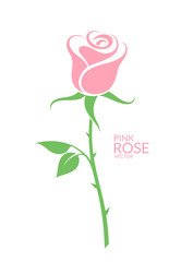 Pink rose. Isolated flower on white background