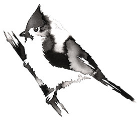 black and white monochrome painting with water and ink draw cardinal bird illustration
