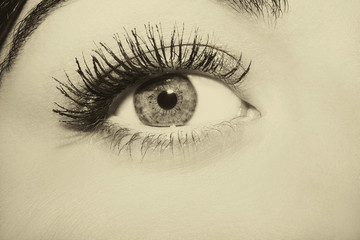 Woman brown eye with extremely long eyelashes. Vintage style