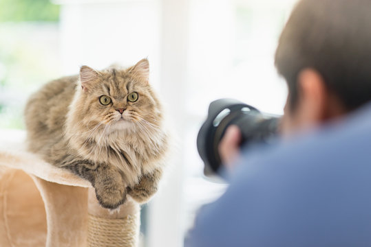 photographer taking a photo of persian cat
