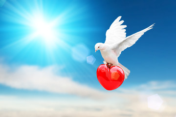 Foto En Lienzo - white dove holding red heart