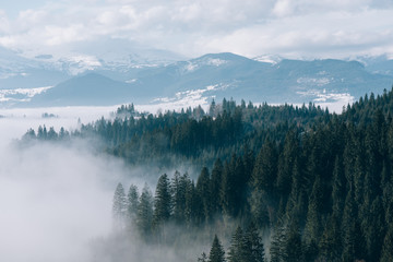 Mountain landscape with fir forest and fog