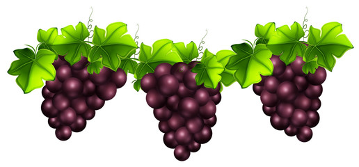Fresh grapes and leaves