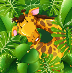 Cute giraffe in green bush