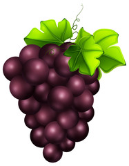 Fresh grapes on white background