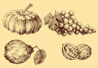 Fruits vector set hand drawn