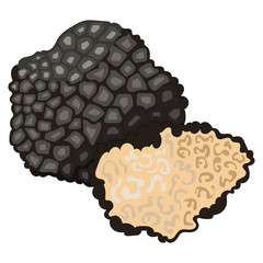 Vestor illustration of black truffle