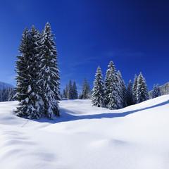 Winter Landscape, Spruce Tree Forest Covered by Snow, Allgäu, Bavaria, Germany