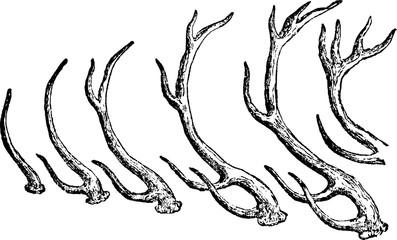 Vintage image deer antlers Wall mural