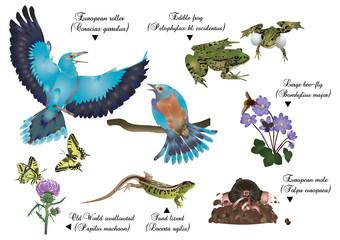 Amazing nature set - European animals