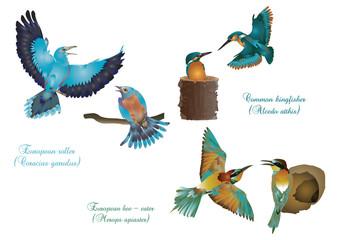 European beautiful birds