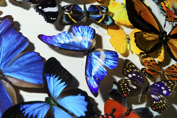 Many colorful tropical butterfly on white background, nature wildlife pattern, selective focus