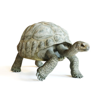 Large tortoise walking on a isolated white background. 3d rendering