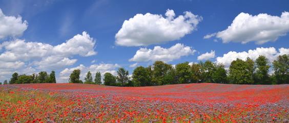 Panoramiczny widok przepięknego pola maków i facelii w Polsce