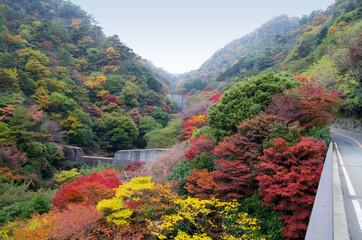 Colorful Autumn leaves at Mount Rokko in Kobe Japan