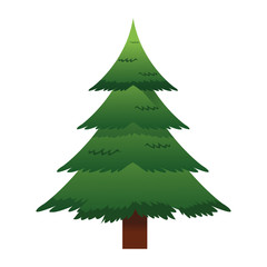 flat design pine tree icon vector illustration