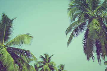 Foto op Textielframe Khaki Coconut palm trees at tropical beach vintage filter