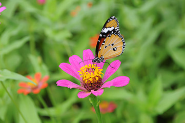 Butterfly with Flower in garden.