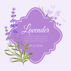 Wall Mural - Greeting card, invitation vector template with fragrant lavender