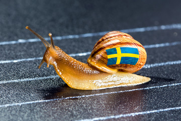 Snail under flag of Sweden on sports track
