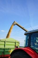 Fototapete - Getreideernte, abladen des Getreides auf einen Anhänger