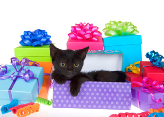 Black kitten with yellow eyes laying in purple polka dot birthday present box, ribbons and bows on presents around them isolated on a white background looking to viewers right.