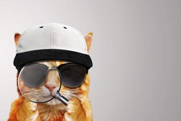 Detektiv Katze