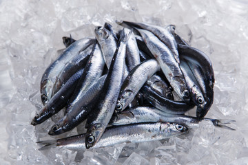 fresh raw fish anchovy on ice seafood
