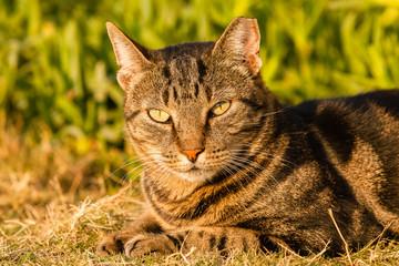 Cat Head closeup outdoors portrait