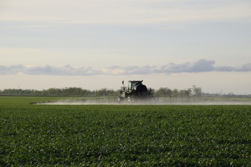 Tractor with high wheels is making fertilizer on young wheat