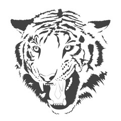 face of tiger black white illustration