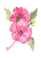 Red hibiscus flowers on white, watercolor painting
