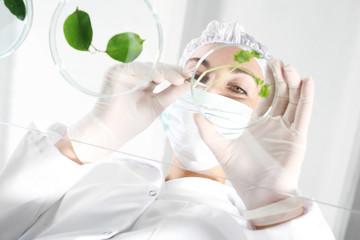 Genetycznie modyfikowane rośliny. Biotechnolog bada próbki roślin w laboratorium