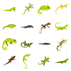 Flat lizard icons set. Universal lizard icons to use for web and mobile UI, set of basic lizard elements isolated vector illustration