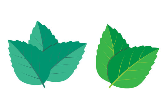 Mint vector illustration set eps10