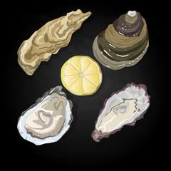 Sea shells vector illustration